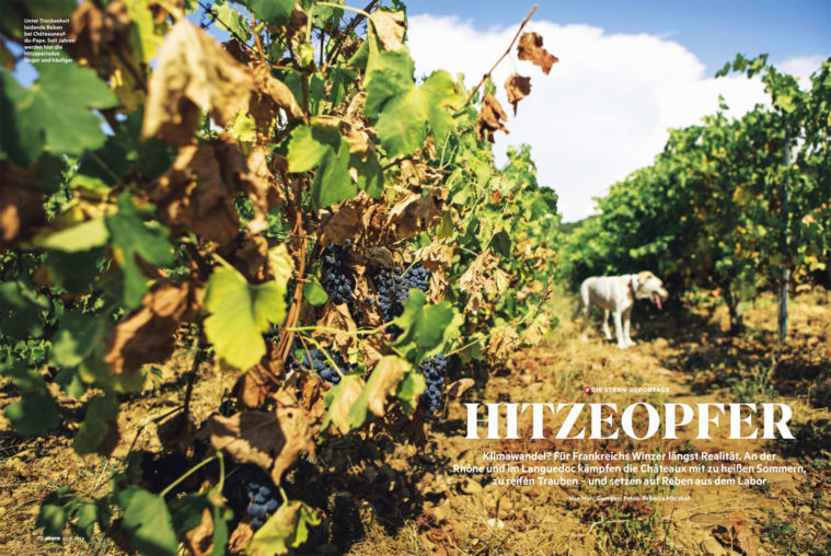 Double-page photograph showing grapevines on a vineyard and a panting dog, title text overlaid